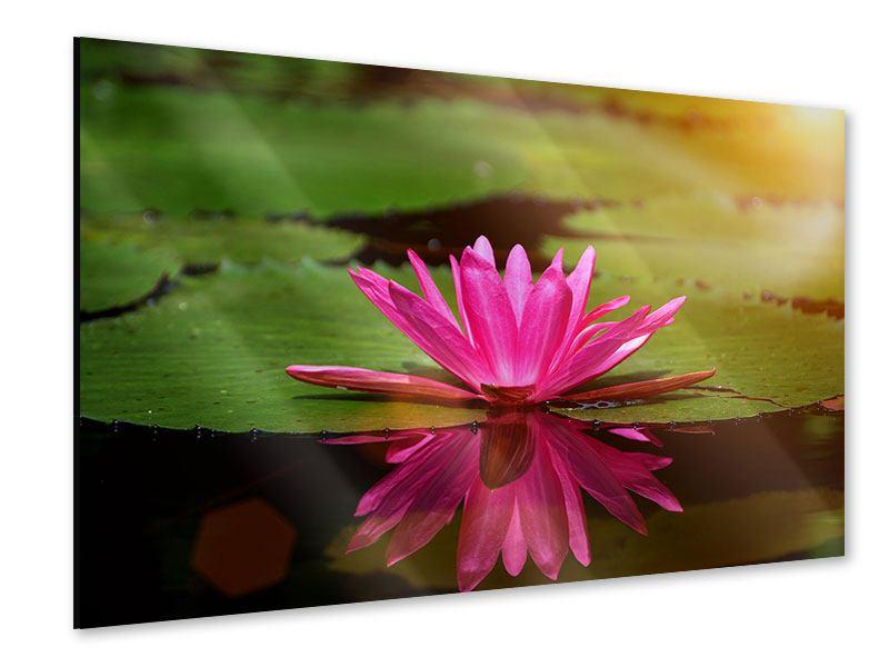 Acrylglasbild Lotus im Wasser