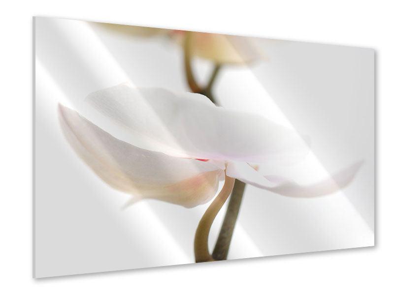 Acrylglasbild XXL Orchideenblüte
