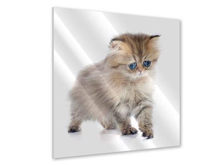 Acrylglasbild Perserbaby