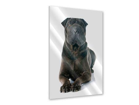 Acrylglasbild Der Mastiff