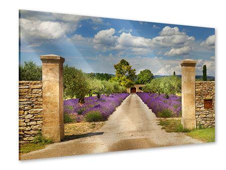 Acrylglasbild Lavendel-Garten