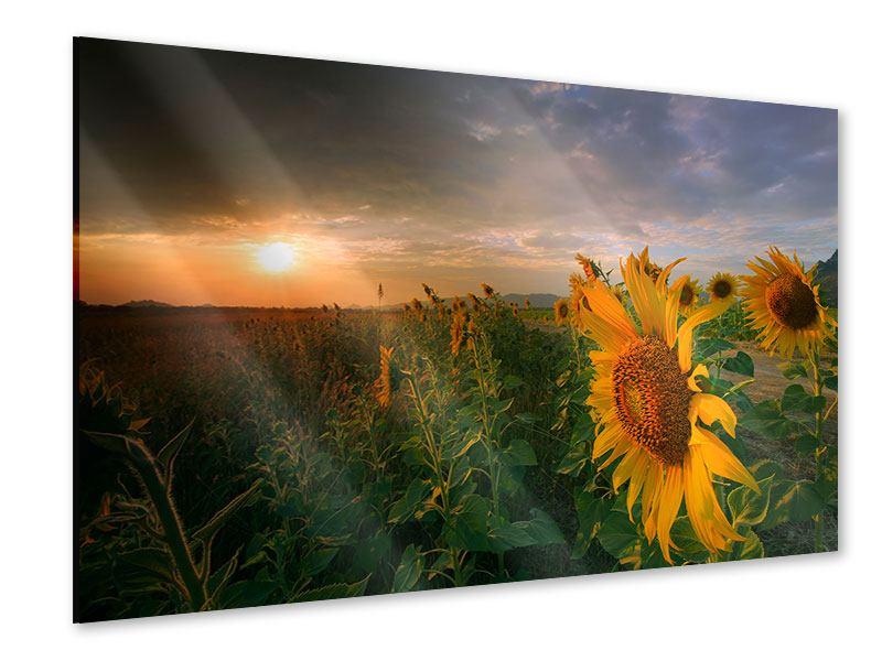 Acrylglasbild Sonnenblumen im Lichtspiel