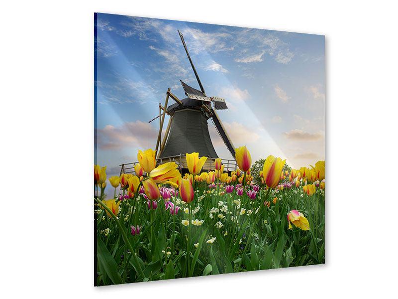 Acrylglasbild Die Windmühle mit den Tulpen