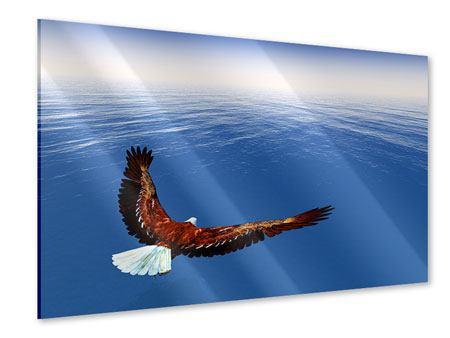Acrylglasbild Der Adler
