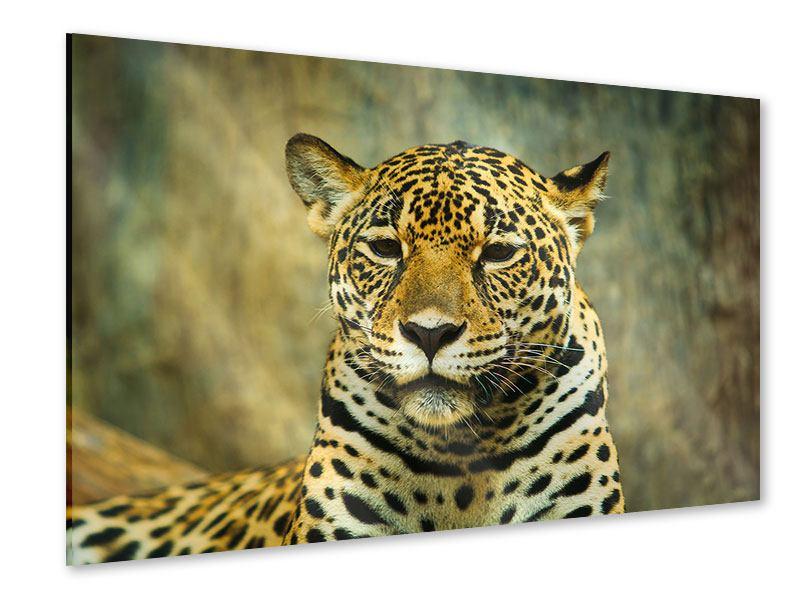 Acrylglasbild Pantherportrait