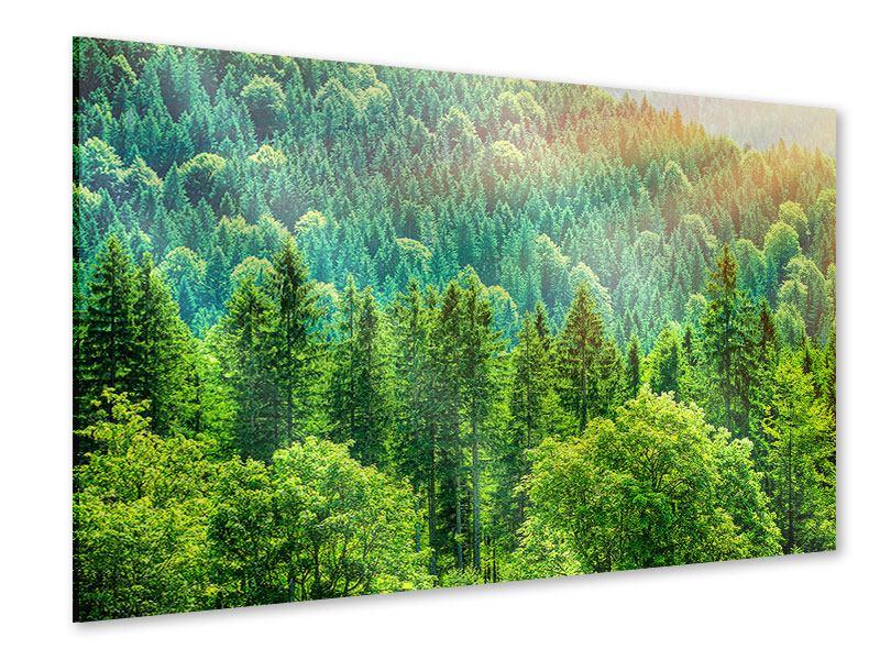 Acrylglasbild Der Waldhügel