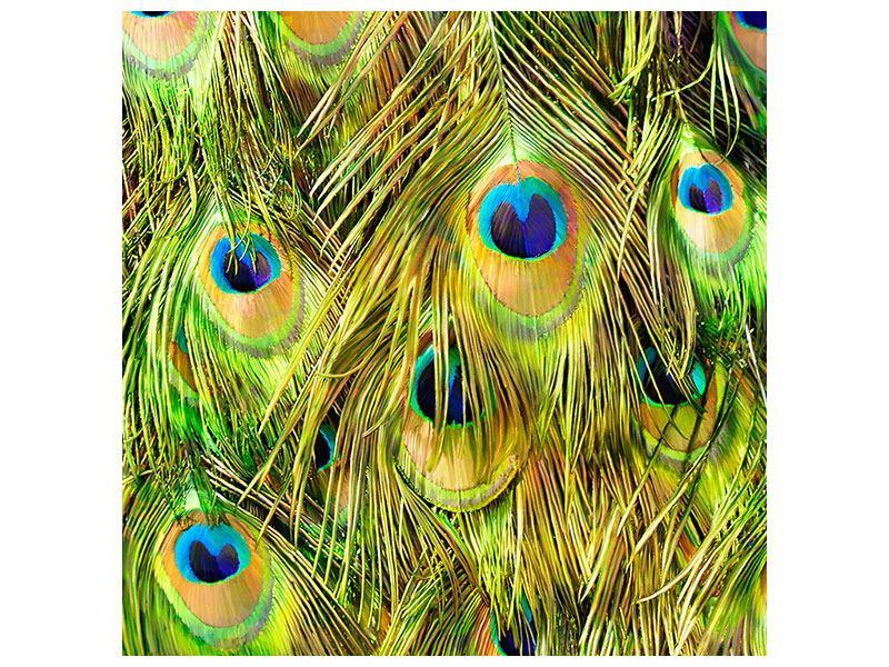 Acrylglasbild Das Pfauenkleid