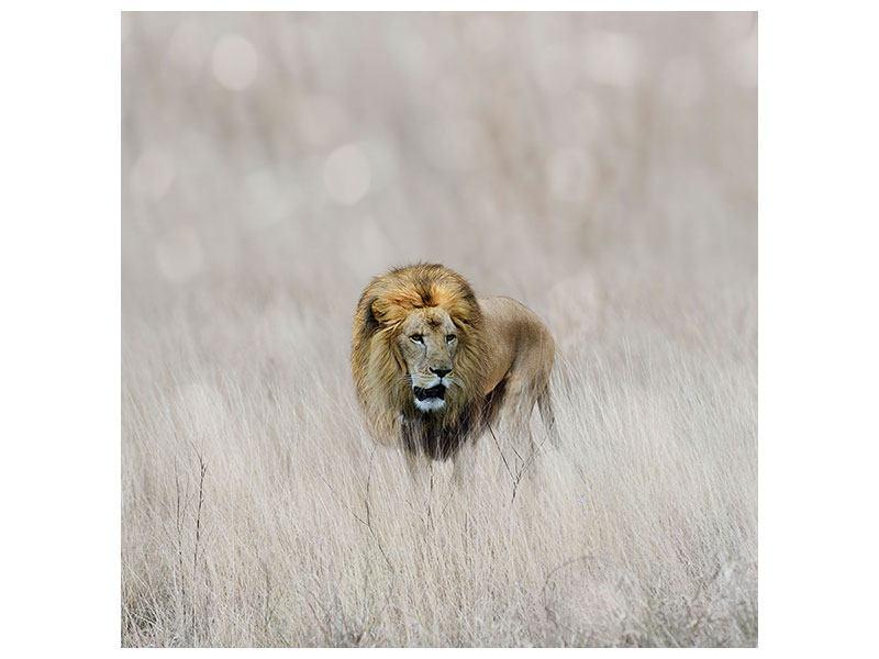 Acrylglasbild Der Löwe
