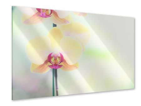 Acrylglasbild Lovely Orchidee