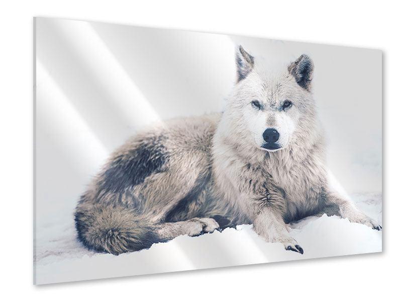 Acrylglasbild Der Wolf
