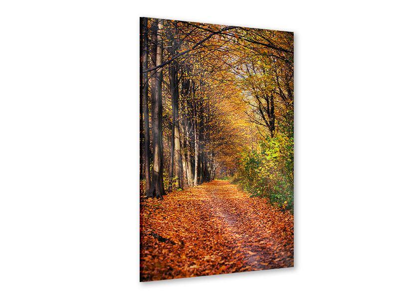 Acrylglasbild Laubwald im Herbstlicht