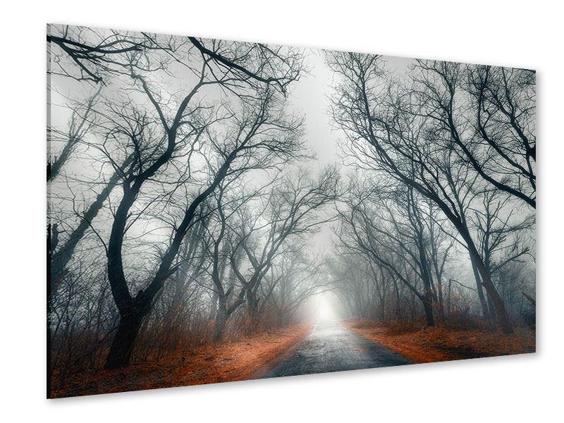 Acrylglasbild Mysteriöse Stimmung im Wald