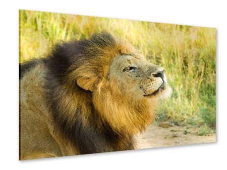 Acrylglasbild Der König der Tiere