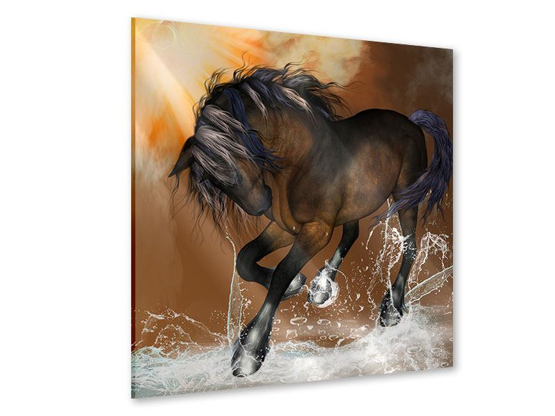 Acrylglasbild Black Beauty