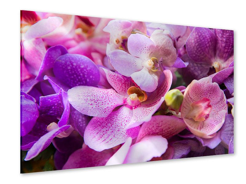 Acrylglasbild Im Orchideenparadies