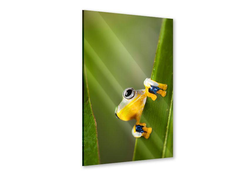 Acrylglasbild Frosch