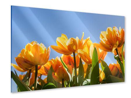 Acrylglasbild Märchenhafte Tulpen