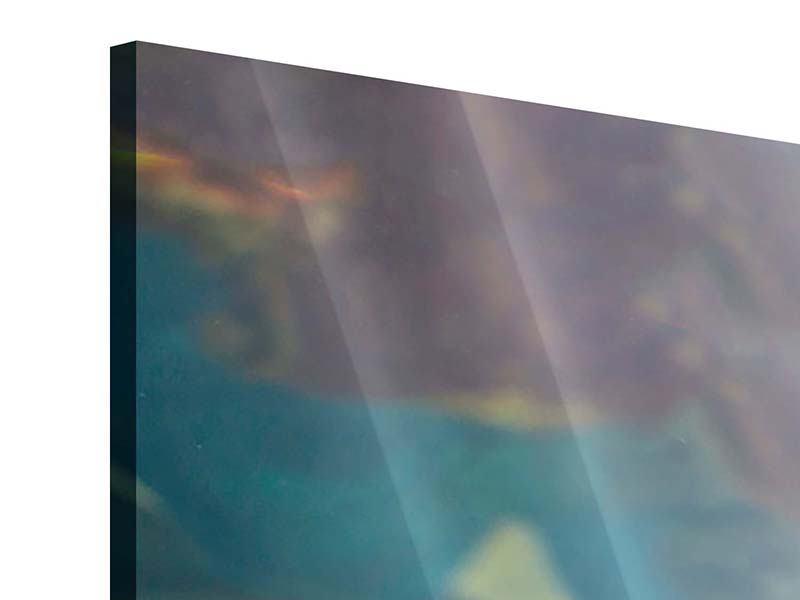 Acrylglasbild Hai