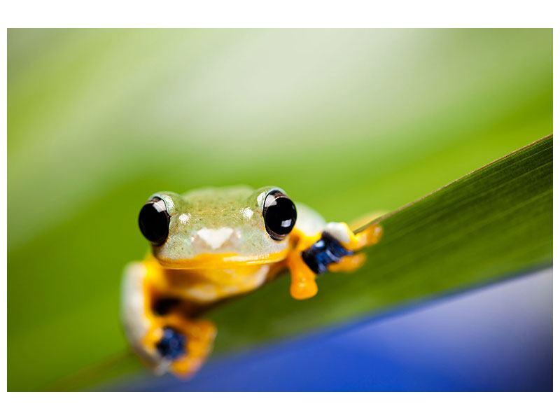 Acrylglasbild Frosch XXL