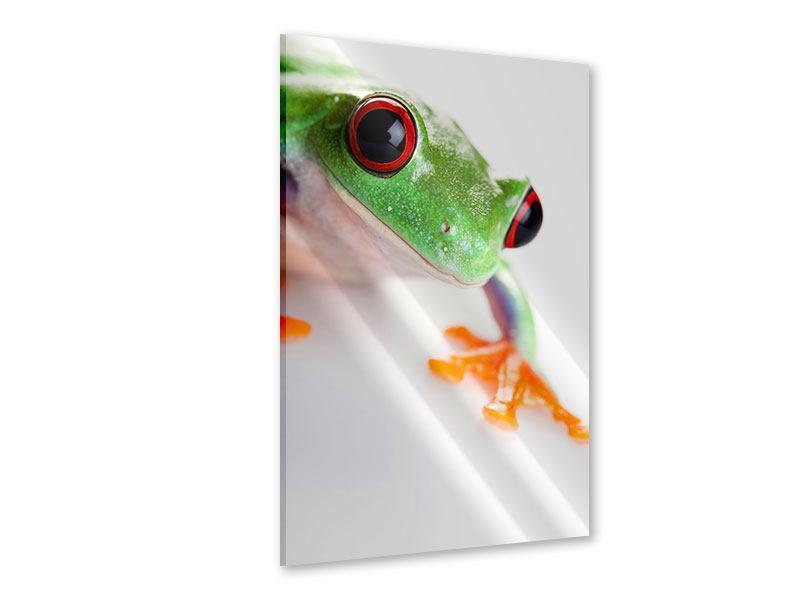 Acrylglasbild Frosch Close up