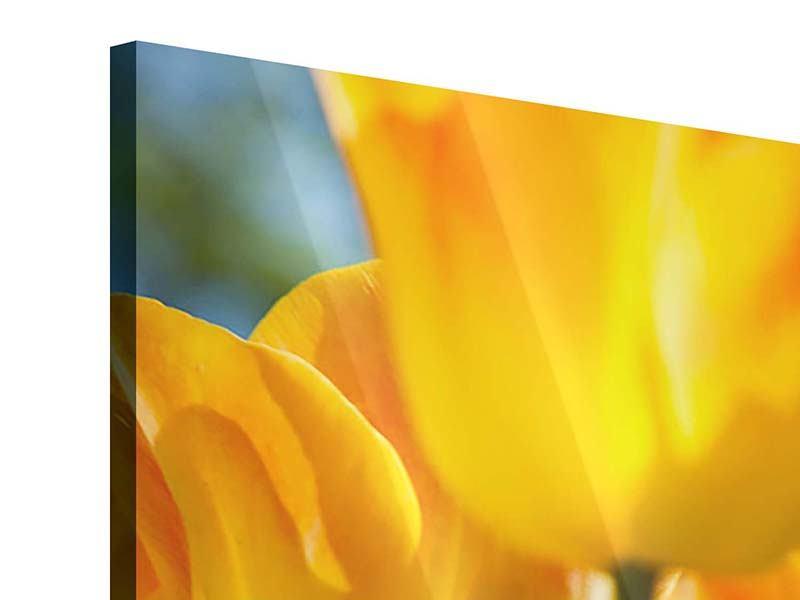 Acrylglasbild Im Tulpenbeet