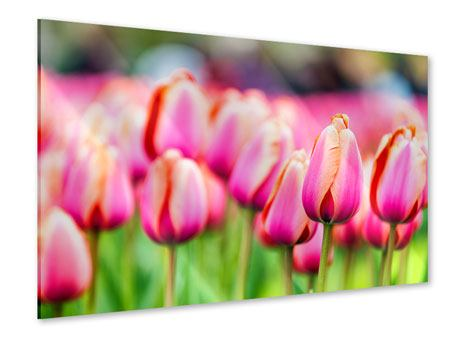 Acrylglasbild Pretty in Pink