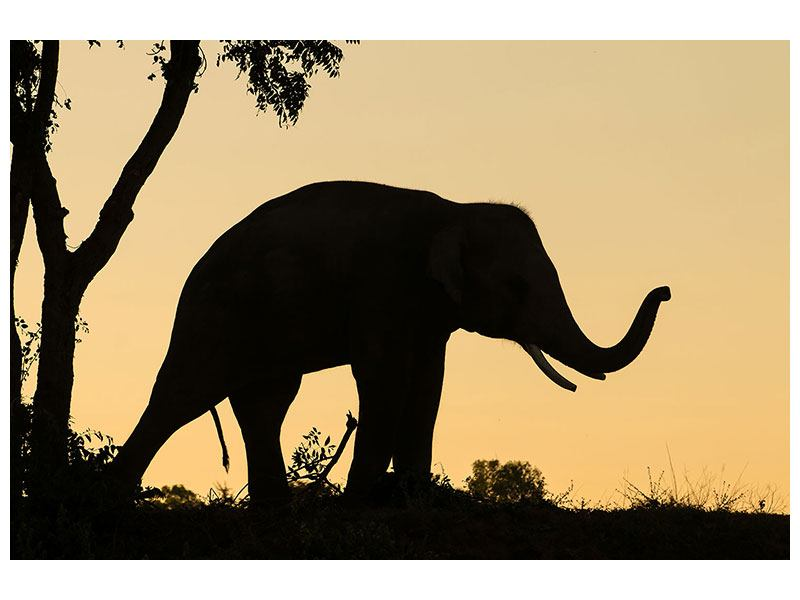 Acrylglasbild Elefant an der Wand