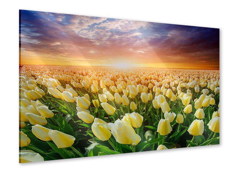 Acrylglasbild Sonnenaufgang bei den Tulpen