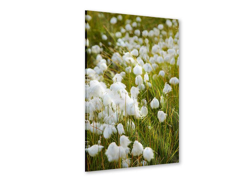 Acrylglasbild Die Wiese der Baumwolle