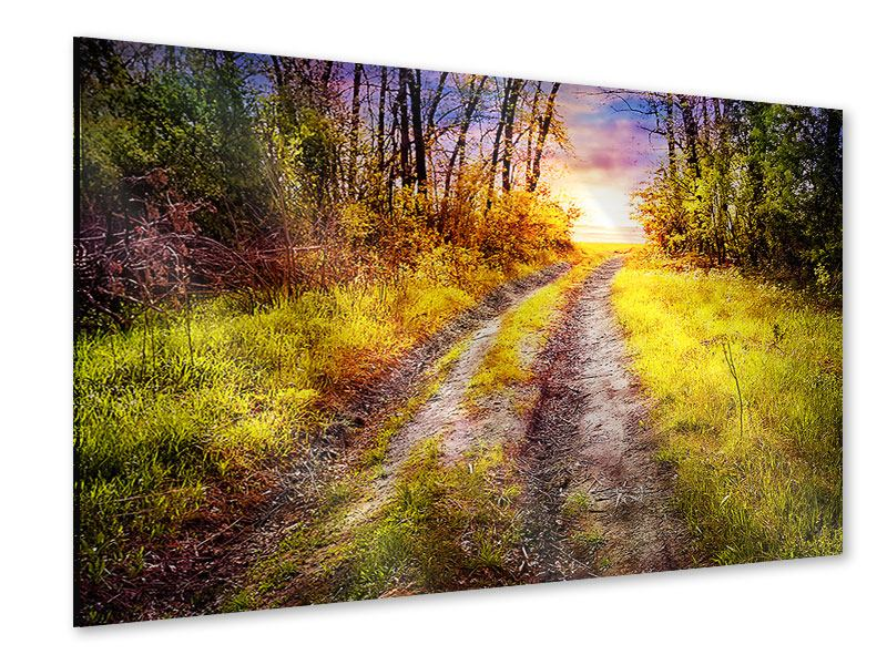 Acrylglasbild Der Waldpfad