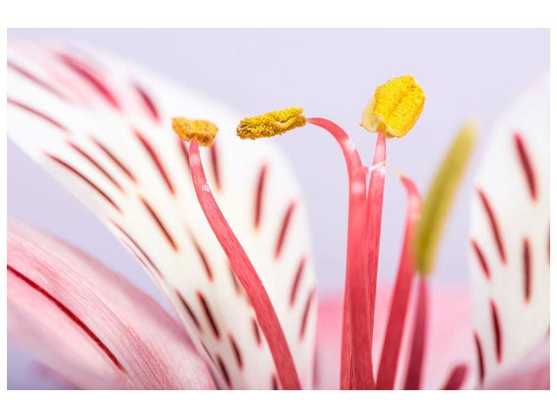 Acrylglasbild Close Up Die exotische Schönheit
