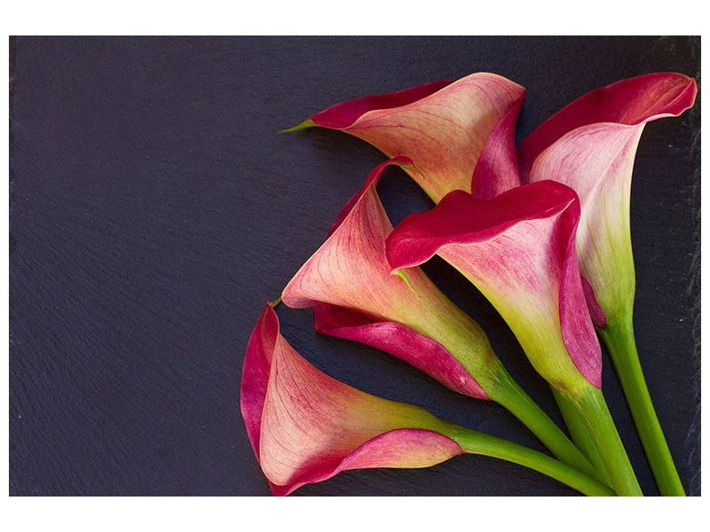 Acrylglasbild Callastrauss