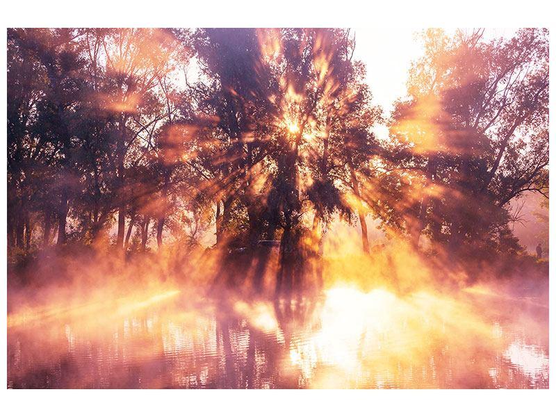 Acrylglasbild Die Waldspiegelung