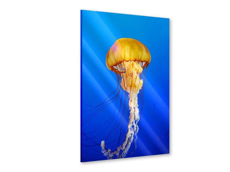 Acrylglasbild Die Qualle