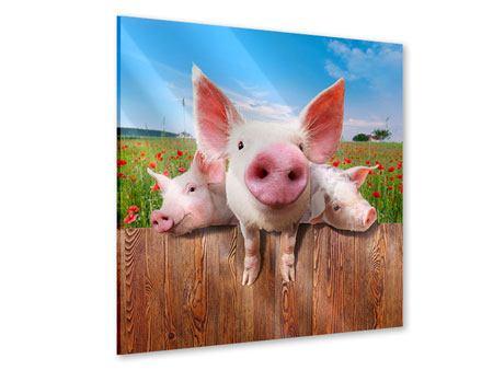 Acrylglasbild Schweinchen im Glück