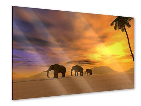 Acrylglasbild Wüstenelefanten