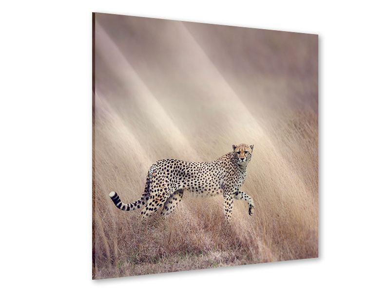 Acrylglasbild Gepard