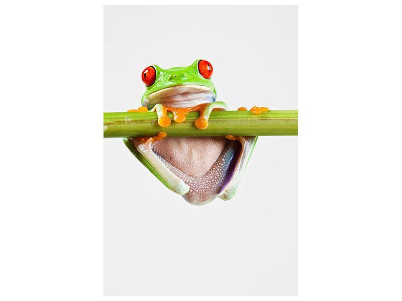 Acrylglasbild Frosch-Akrobatik