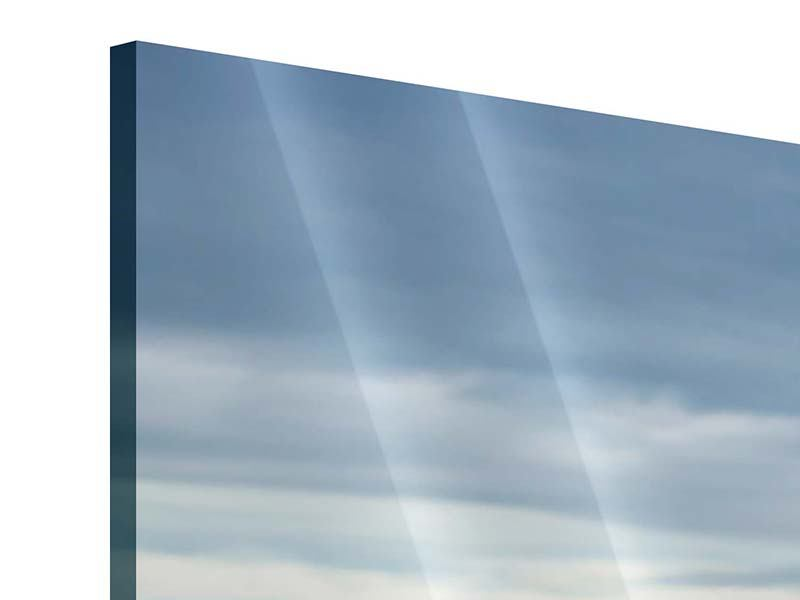 Acrylglasbild Ein Vollblutpferd am Meer