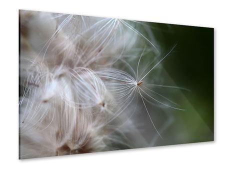 Acrylglasbild Close up Blütenfasern