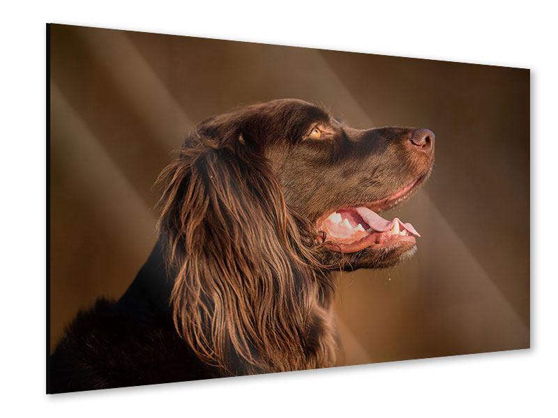 Acrylglasbild Der Jagdhund im Profil