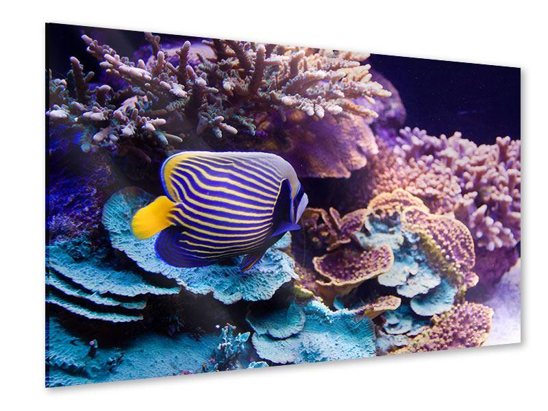 Acrylglasbild Faszination Unterwasser