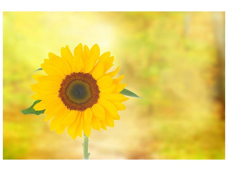 Acrylglasbild Die Sonnenblume