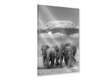 Acrylglasbild Elefantenherde