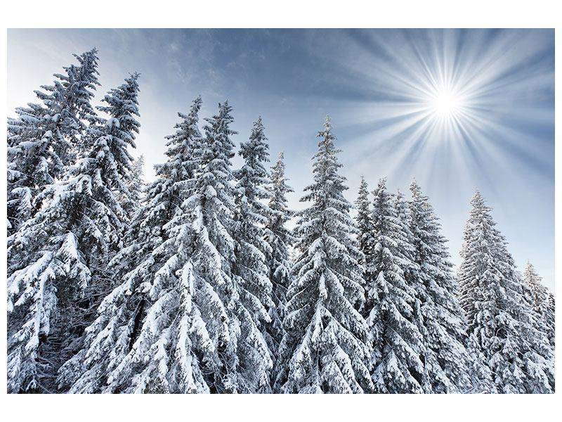 Acrylglasbild Wintertannen