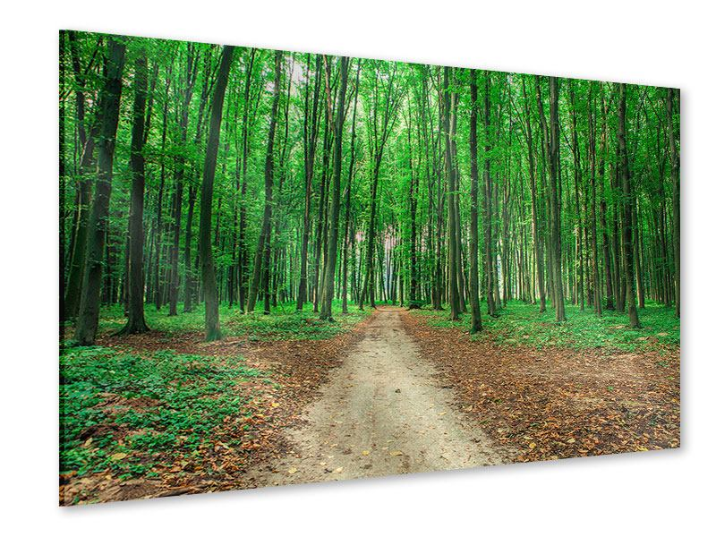 Acrylglasbild Tannenwald