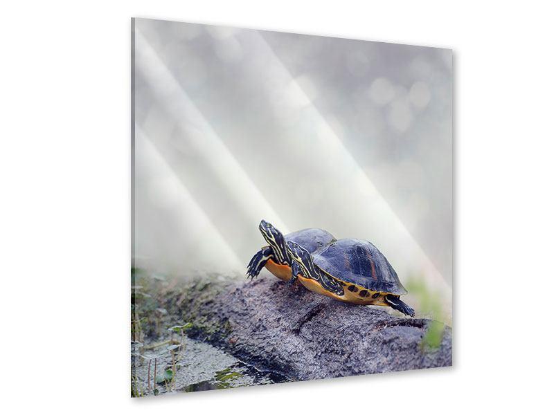 Acrylglasbild Schildkrötenpaar