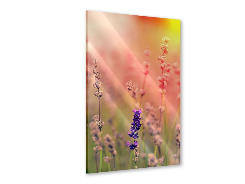 Acrylglasbild Der Lavendel