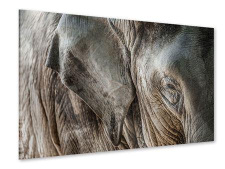 Acrylglasbild Close Up Elefant