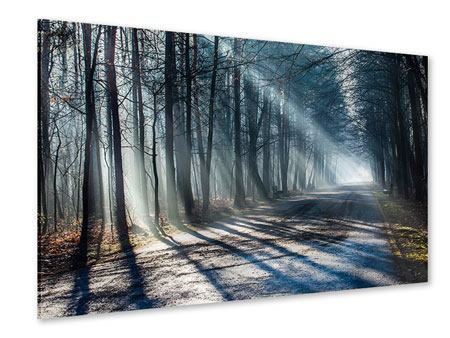 Acrylglasbild Wald im Lichtstrahl